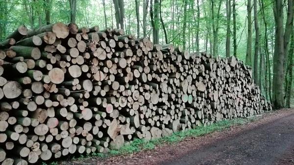Eckpunkte der Waldstrategie 2050