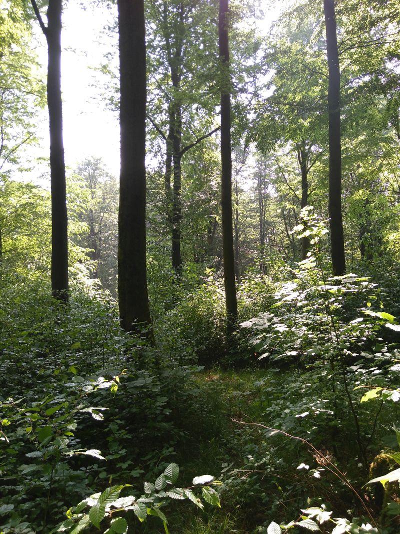 """""""Investitionsprogramm Wald"""" gestartet und ausgeschöpft"""