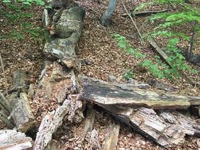 Förderaufruf: Nährstoffnachhaltigkeit – Standortqualität von Wäldern langfristig erhalten