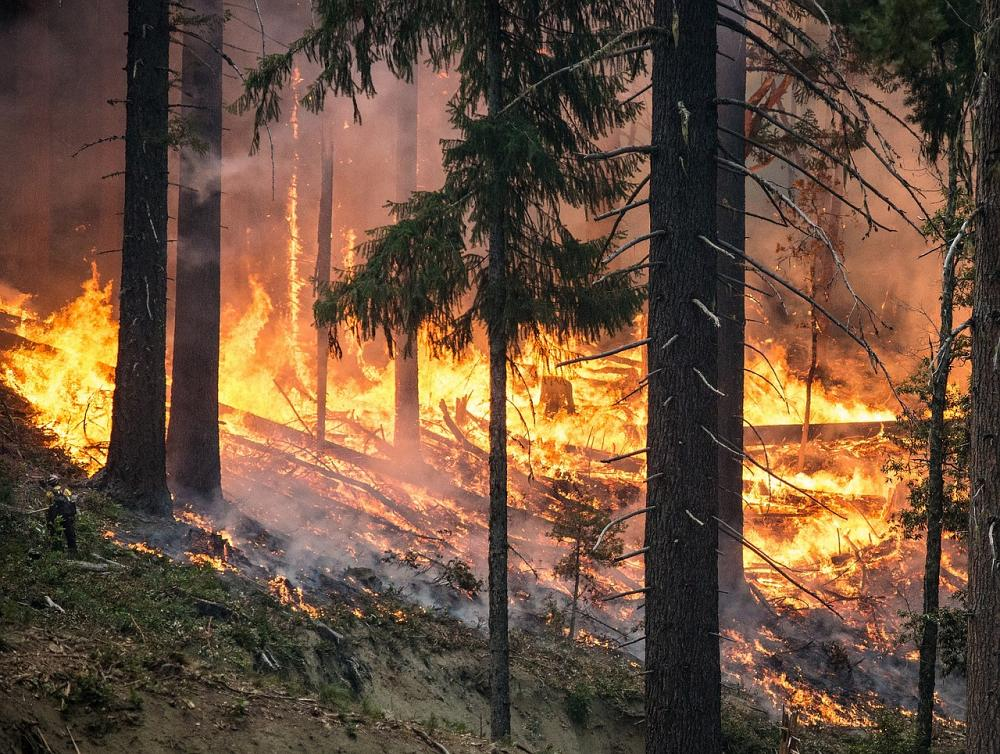 forest fire 2268725 1280